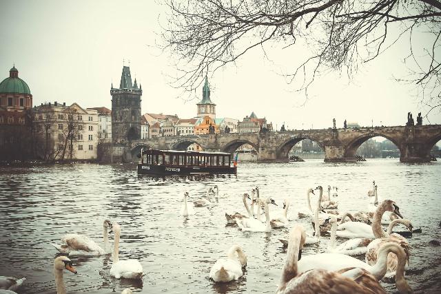 Прага с реката и лебеди