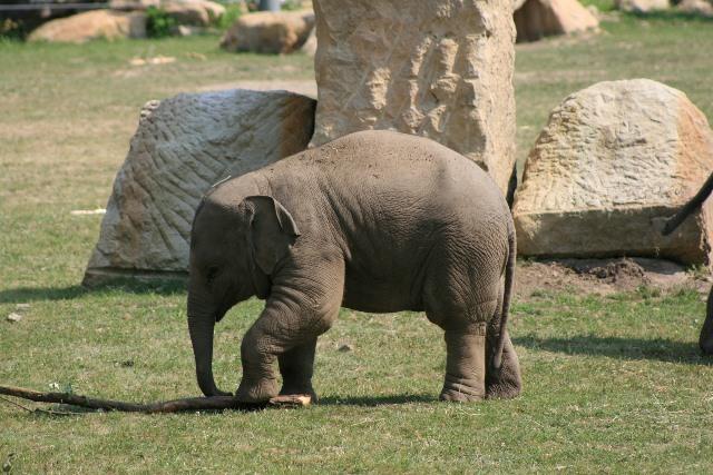 слон в зоопарка в Прага