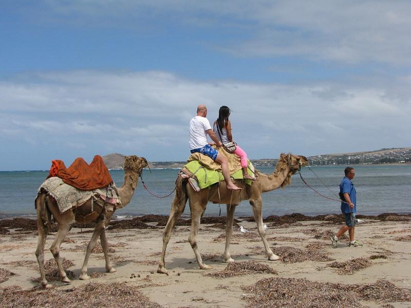 camel-696405_1280